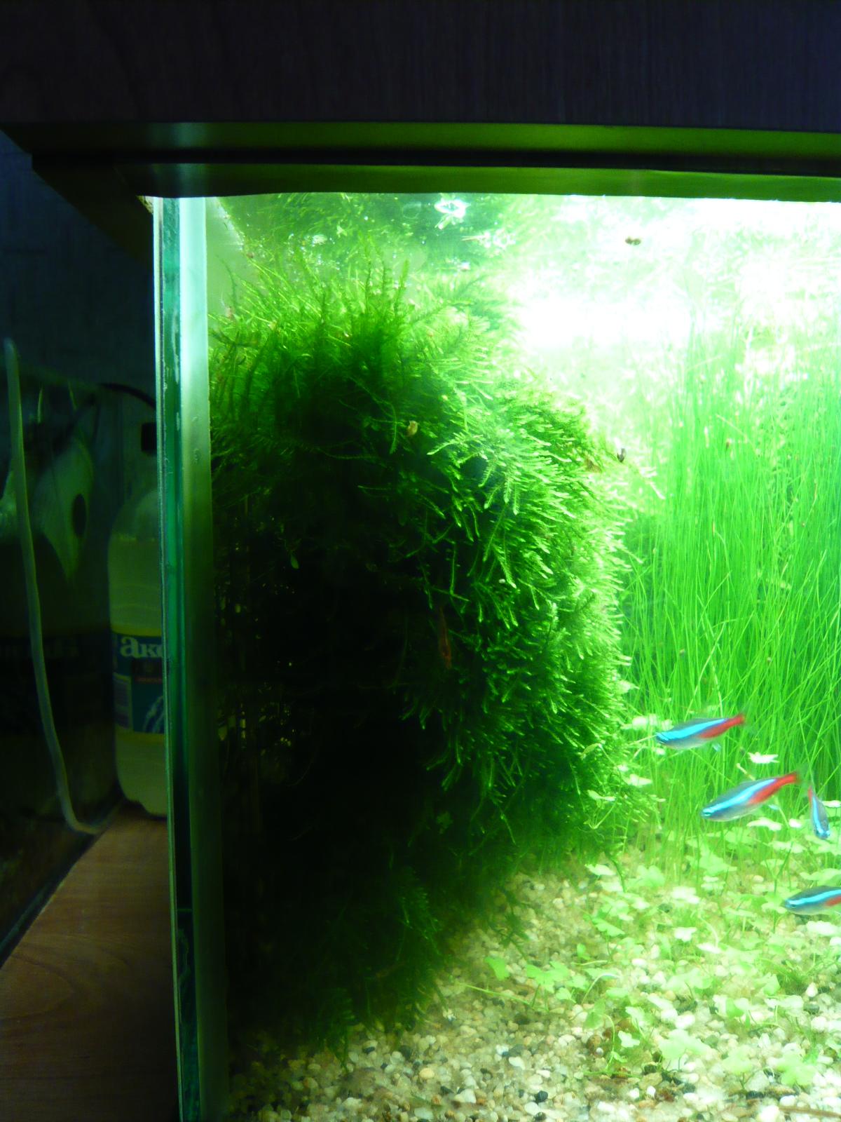 Как украсить аквариум своими руками 15